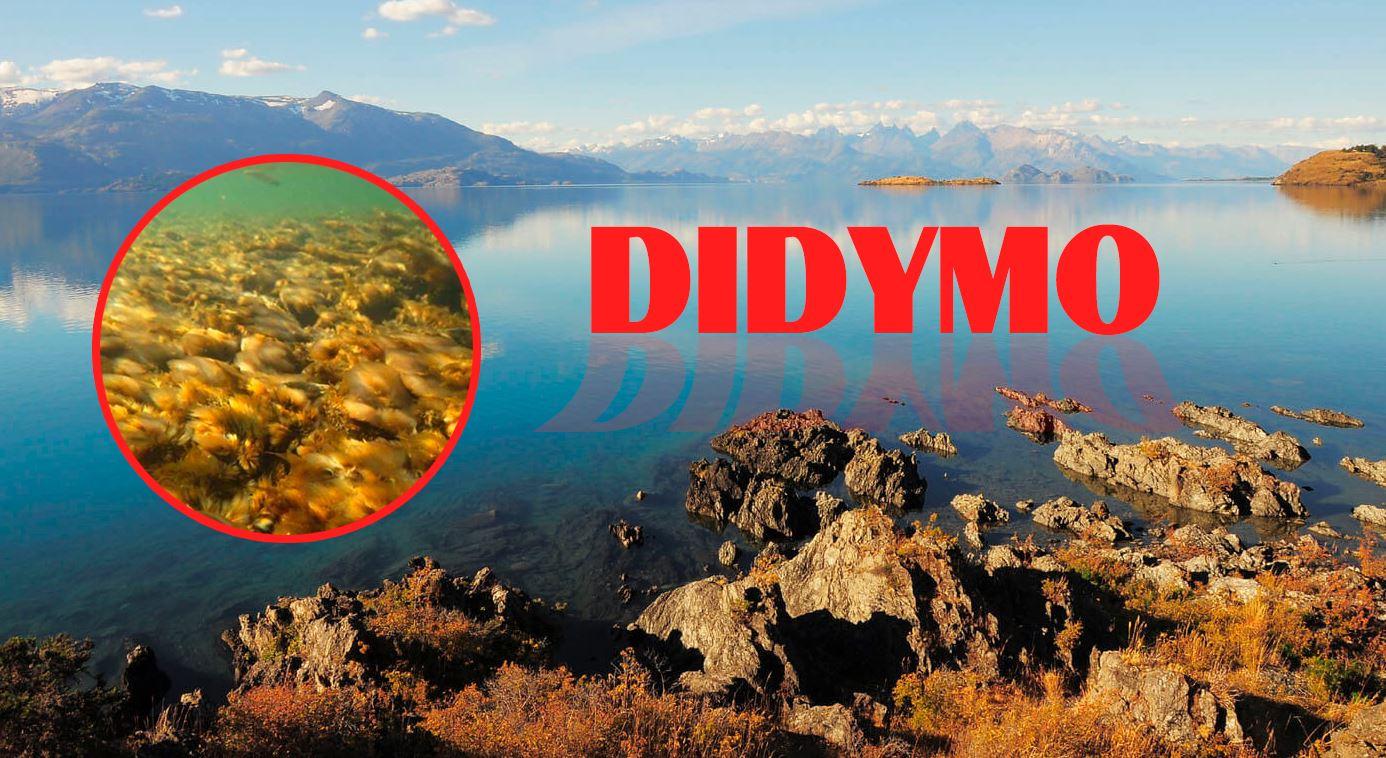 Encuentran Didymo en el Lago General Carrera en la Patagonia Chilena